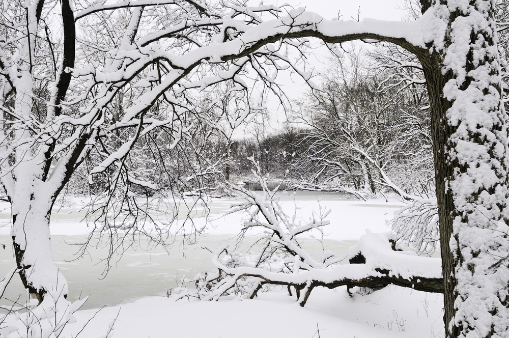 Winter at a glance River with snow and ice framed by trees in foreground after a blizzard early in March, Oak Brook, Illinois